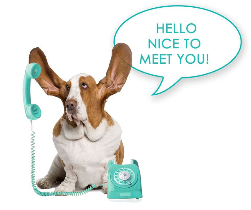 contact-us-basset-hound