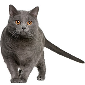 gray-cat-contact